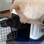 預かり犬 ソフィー&かのこ&ルビー