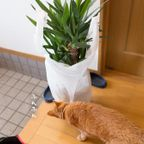 憧れの観葉植物