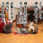 猫たちの捕獲術 【マンガ風】