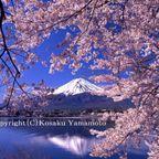 富士山写真館-春