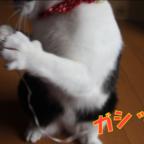 おもしろ猫画像
