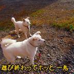 北海道の四季(2)