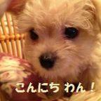マロン ブ~☆/