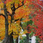枯葉色の公園