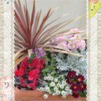 我が家の花アルバム