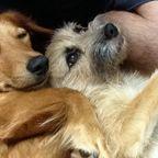 愛犬サンシンとサンバ