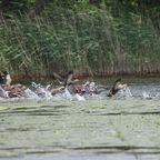 湖北の野鳥
