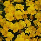 花のポートレート