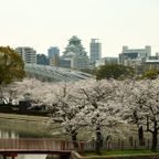 毛馬桜の宮公園