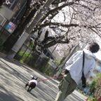 15桜ドックラン