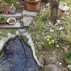 池とその周りにて、メダカやカエル