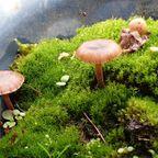 蘚苔類と羊歯など