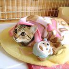 お世話した猫ちゃん