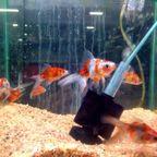 魚・小動物
