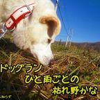 アズキの写真日記4