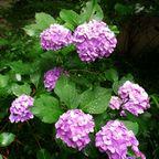 吉城園の植物たち