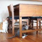 猫の家お宅訪問
