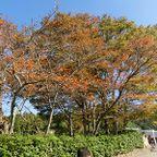 秋の関西・愛知の自転車のりブロガー合同合宿