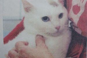 迷子猫と、ご支援のお願い