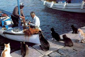 猫の集まる場所