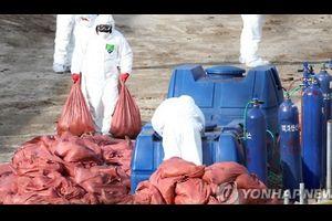 【衛生】鳥インフルで過去最悪被害の韓国 日本お手本に制度改善へ