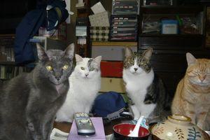 実家で飼っているネコ4匹が逆毛を立てて興奮していて裏にいるもう一匹を出してあげようとしたら知らない黒猫が登場!!