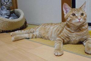 チビ・トラ猫日記(2)