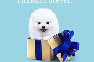 ソフトバンクの長期継続特典の申し込みをしてTポイント15000円分をもらおう   SoftBank