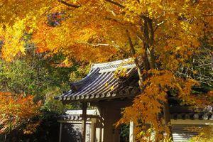 晩秋を満喫 横浜 三溪園の紅葉