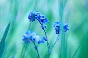 野に咲く花のように。