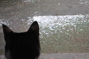 今日は雪でしたね!