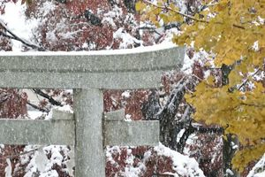 氷川神社 雪景色