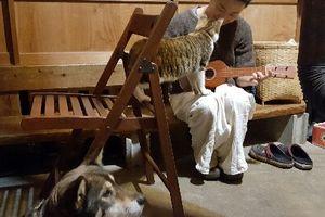 犬と猫とウクレレと