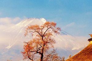 ❁朝霧の優美なる【富士山】雄姿❣