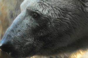 2月26日 ツヨシと子トラ|よこはま動物園 ズーラシア