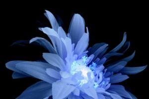Blue Snow Cafe