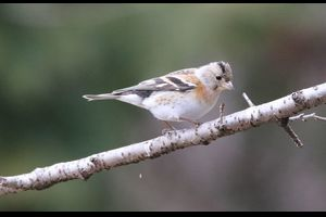 湖北の自然/野鳥撮影記