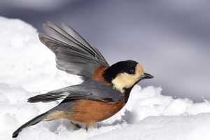 Paradise of the Wild bird…野鳥の楽園…