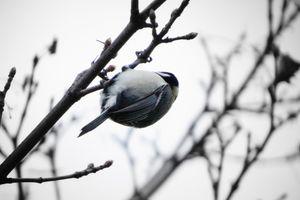 ☆マクロに魅せられ☆野鳥と仲良く♪