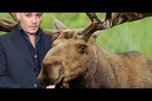 ケビン・スミス監督トリロジー作品3作目はジョニー演じるガイ・ラポイントが大鹿に食べられる?