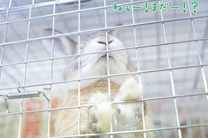 SAVE THE RABBITS