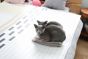 猫。ダブルちんまり