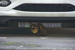 車の下にこっそりと