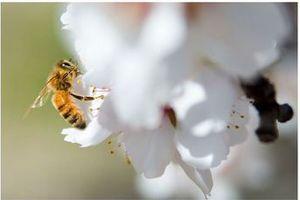 【翻訳記事】ミツバチにやさしい農業でより健やかな未来へ