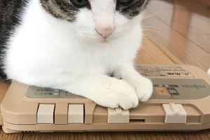 猫はスイッチを動かす