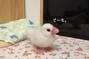 レンジャー日記