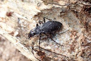 虫屋モドキの昆虫メモ
