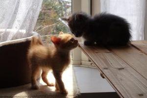 子猫たちの決闘! ねこのすっぱ抜きサラダ トップページ