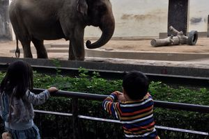 神戸の人気スポット「王子動物園」 その魅力とは?