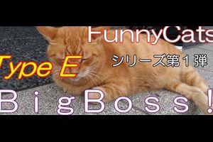 運用実績「BigBoss!_TypeE」 FX自動売買・メタトレーダー・システムトレード